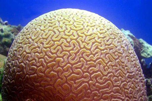 Cerveau ? par Robert Nopre