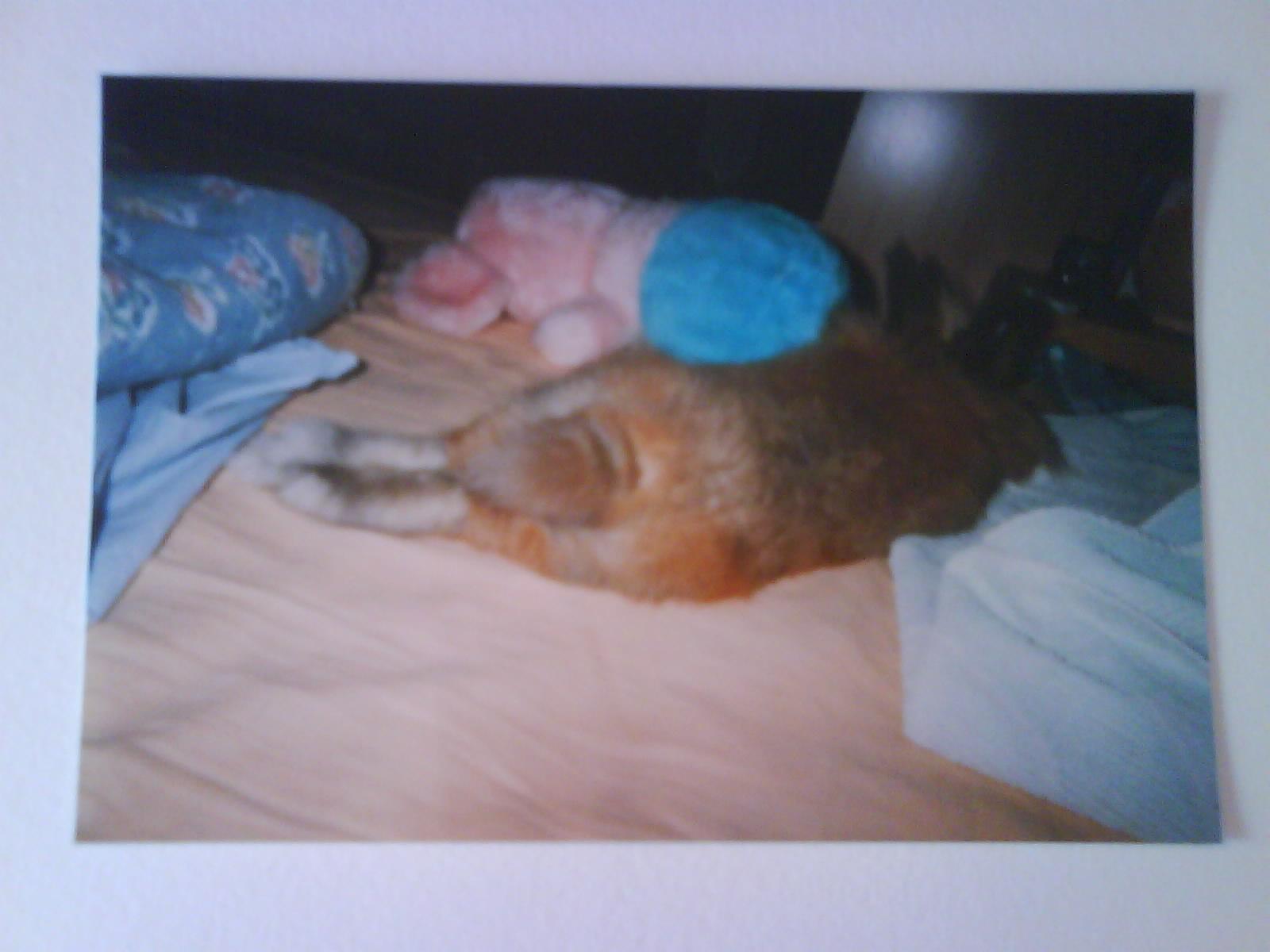 Qui est stanley le lapin nain les animations contes et jeux pour enfants de marjo le dino - Jeux pour lapin a fabriquer ...