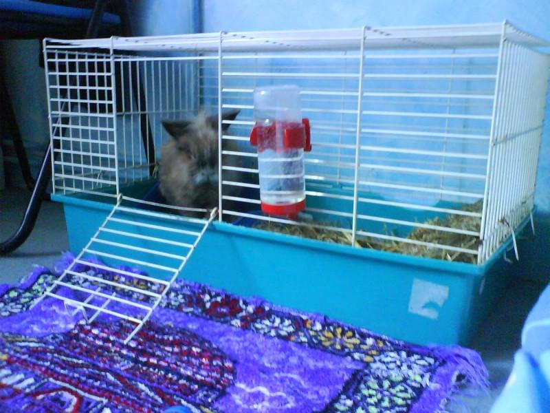 comment prendre soin d un lapin nain les animations contes et jeux pour enfants de marjo le dino. Black Bedroom Furniture Sets. Home Design Ideas