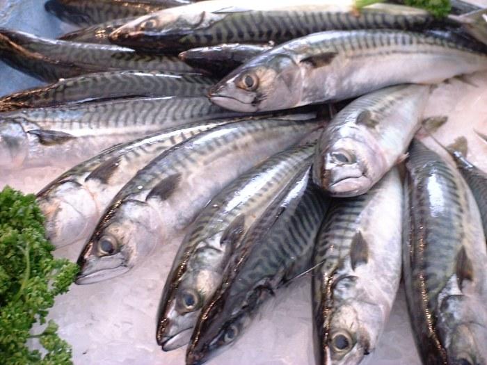 Maquereaux en poissonnerie - domaine public