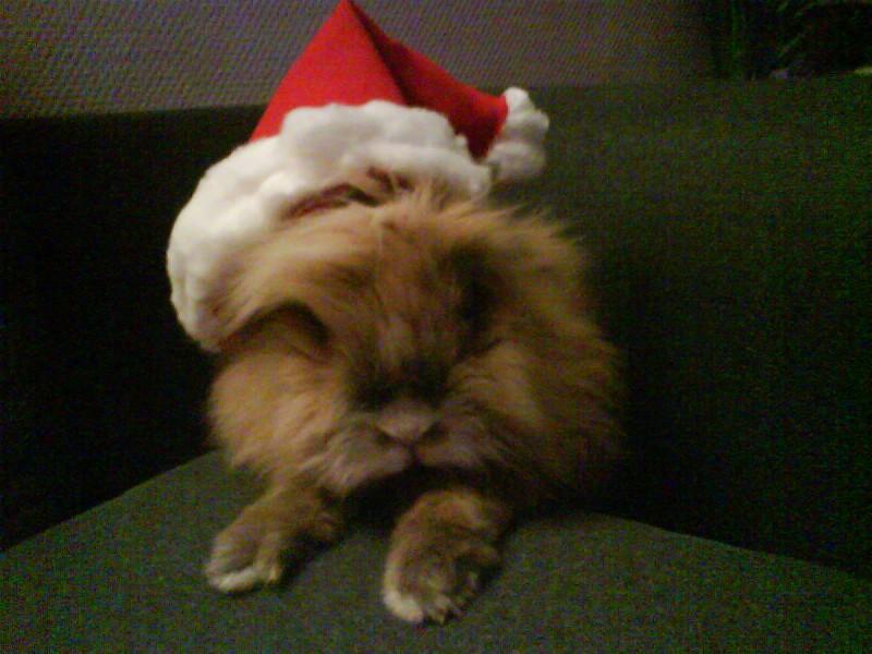 Stanley et son bonnet de Père Noël