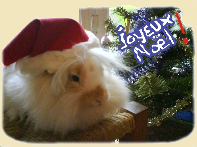 Joyeux noël les lapins nains ! dans Les vacances de vos boules de poils chez Marjoledino fternoelentrelapinsnains1
