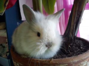 bebes-lapins-%C3%A0-adopter-mars-12-9-300x225 dans Nouveautés chez Marjo le dino