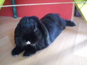 Les vacances de vos lapins en juillet 2012 dans Les vacances de vos boules de poils chez Marjoledino DSC00672-Copier-300x225