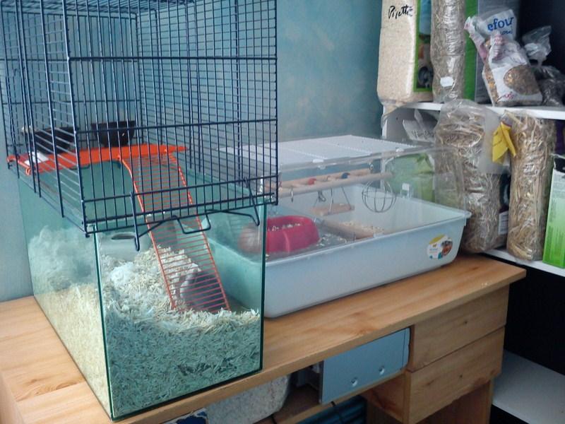 Les vacances de vos lapins en juillet 2012 les animations contes et jeux pour enfants de - Jeux pour lapin a fabriquer ...